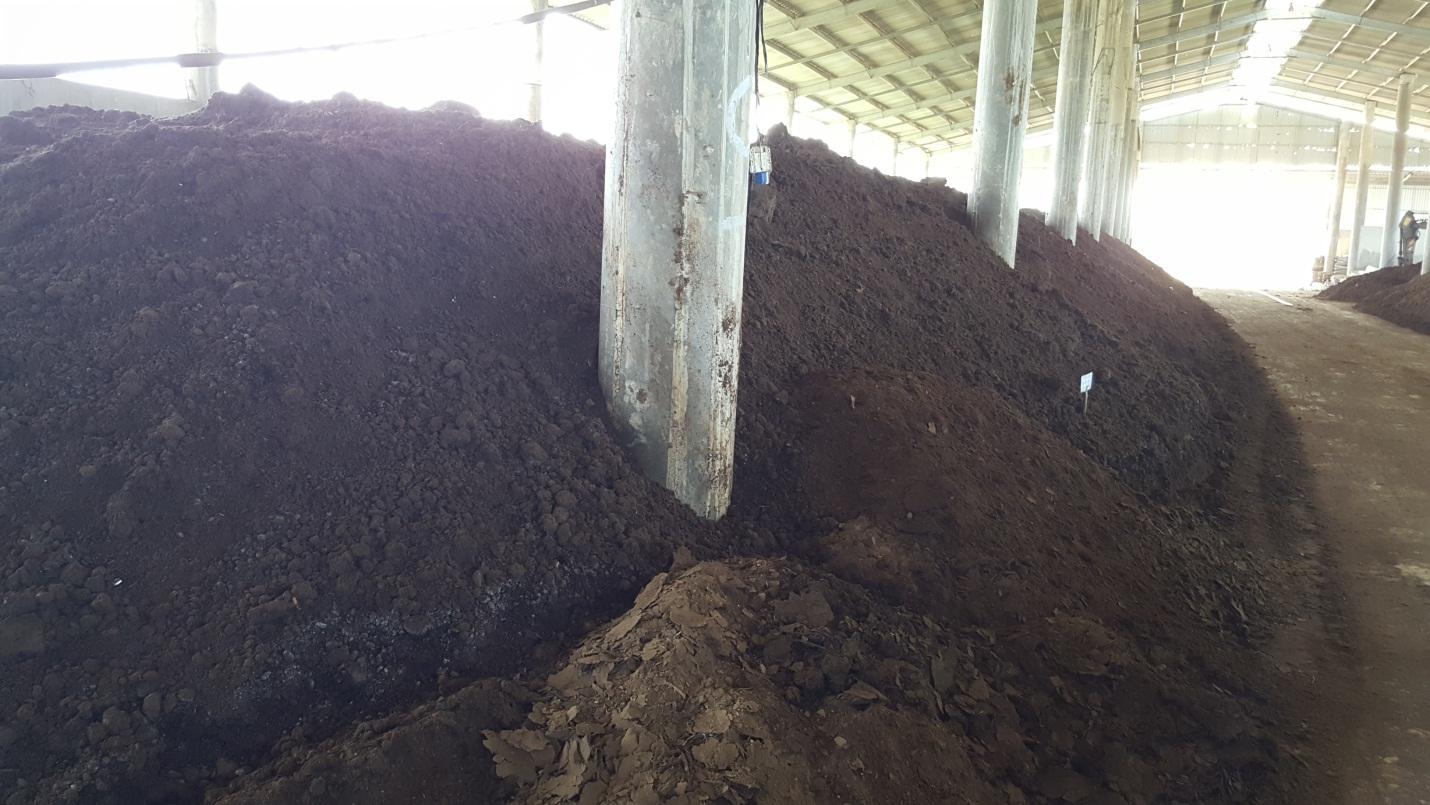 phân bò ủ trong nhà
