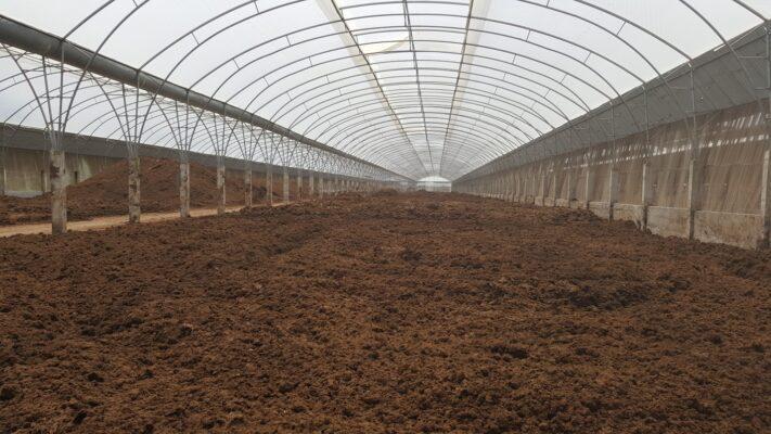 ủ phân bò trong nhà màng